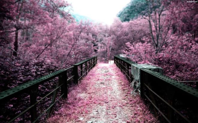 most-drzewa-1